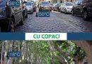 Ce s-ar întâmpla dacă am tăia toți copacii dintr-un oraș?